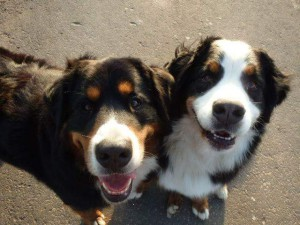 VAKANTIETIJD ... Zorg op tijd voor een goede oppas voor uw huisdier. ? Ik verzorg graag uw huisdier bij u thuis in zijn vertrouwde omgeving. ☺ Honden vang ik alleen op als ze bij mij al in de HUS meelopen en zich goed in mijn roedel thuis in kunnen voegen.. Neem graag contact op voor vragen en informatie.