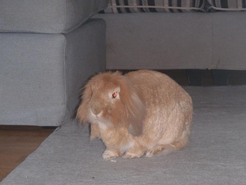 onze konijntjes