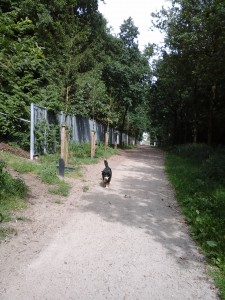 Lekker wandelen in bos Nimmerdor..
