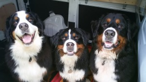 Ronja, Cindy en Emelie na een mooie wandeling op het Erkemeder Hondestrand ???