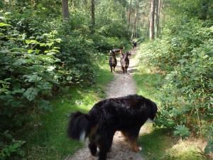 Allemaal achter elkaar lopend in het bos...