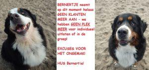 Nieuwjaarswandeling met HUS BERNERTJE @ Soester Duinen   Soest   Utrecht   Nederland
